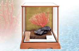 宝石珊瑚の一種・深海松