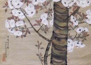 織田瑟々 「有明桜」