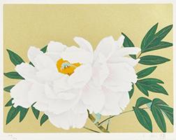 中島千波 「白牡丹」