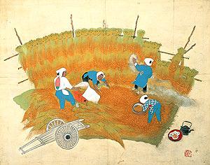 長谷川朝風 収穫