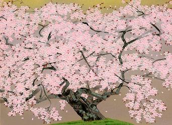 中島千波 春麗山桜