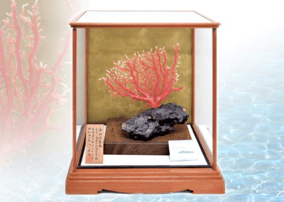 宝石珊瑚 深海松